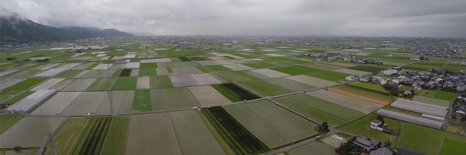 熊本県八代市の美しい田んぼの風景
