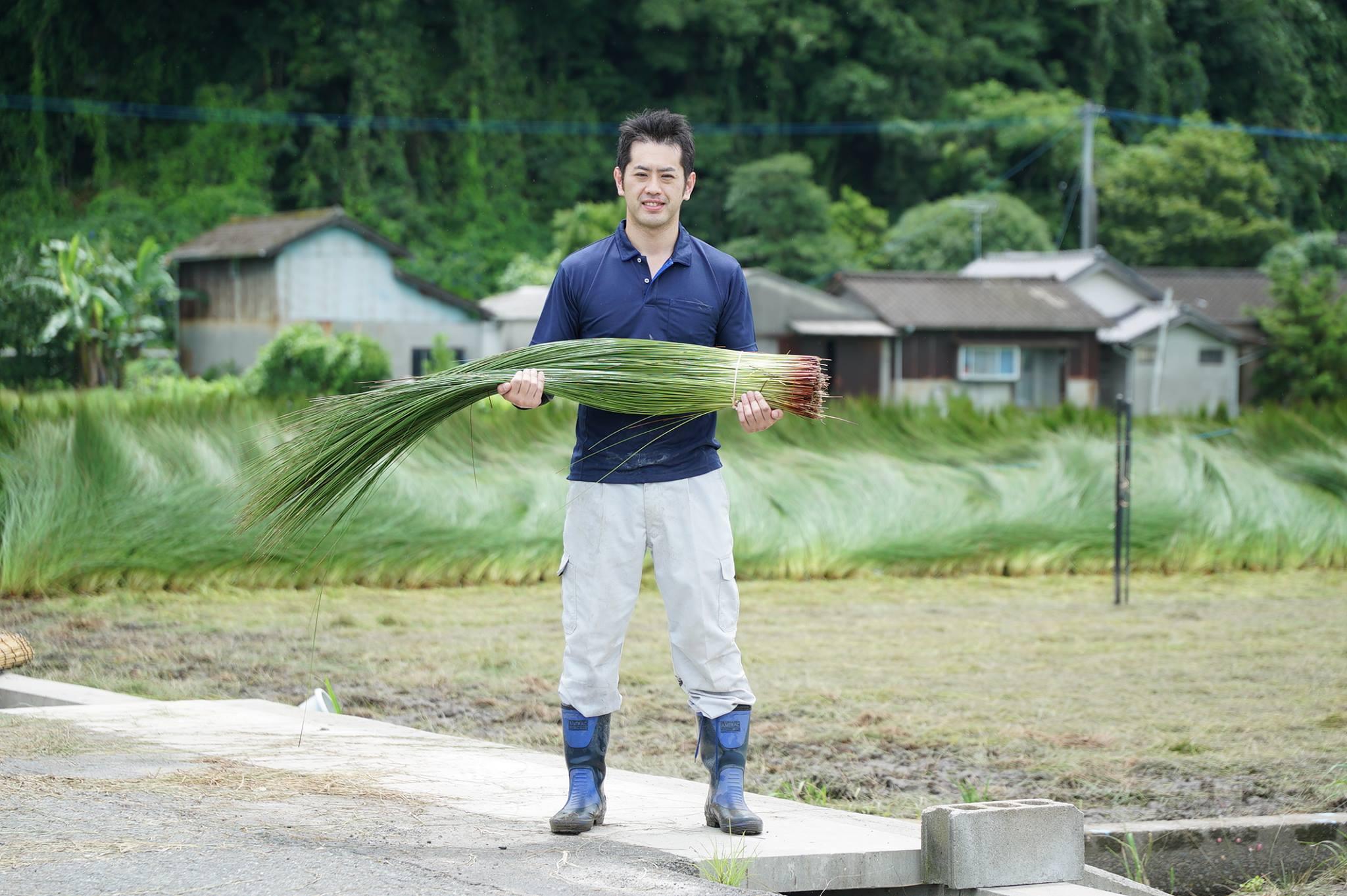 熊本県八代市にい草刈り取り研修に行ってきました!
